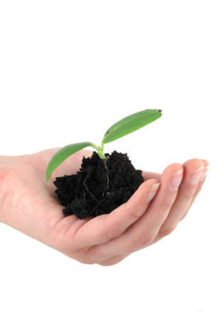 A tender seedling in front of white background Stock Photo - 4821546