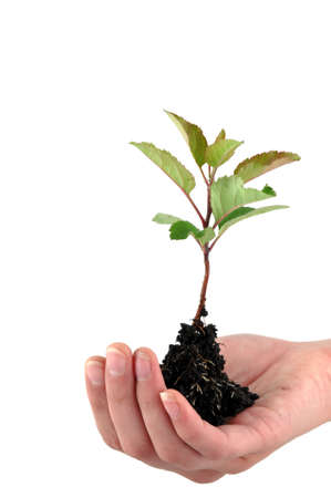 A tender seedling in front of white background Stock Photo - 4821895