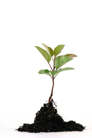 A tender seedling in front of white background Stock Photo - 4821913