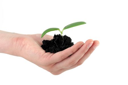 A tender seedling in front of white background Stock Photo - 4822526
