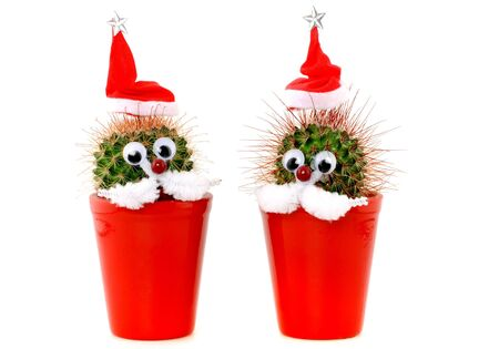 Funny decorated cactus with Santa's hat Stock Photo - 5871947