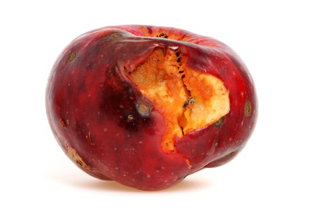 putrid: Worm-eaten apple in front of a white background