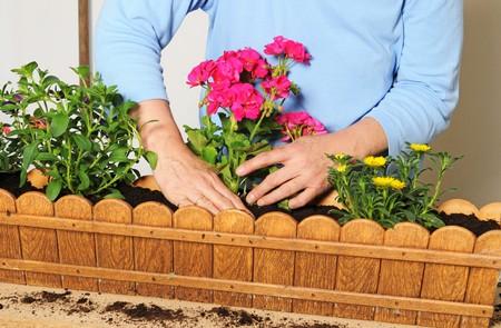 replant: Hausfrau � piantare una casella fiore