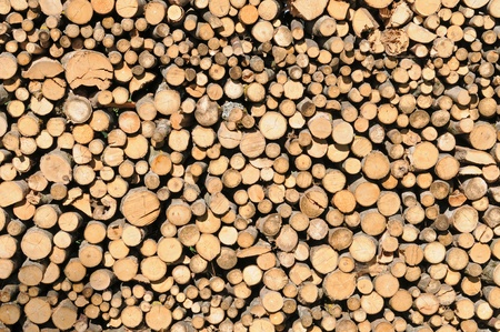 woodpile: Stack of dried firewood Stock Photo