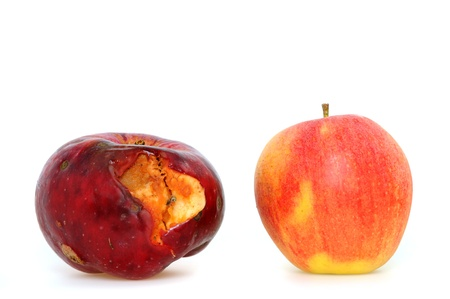 decomposed: Worm-eaten apple from the own garden contra apple from the shop in first class quality Stock Photo