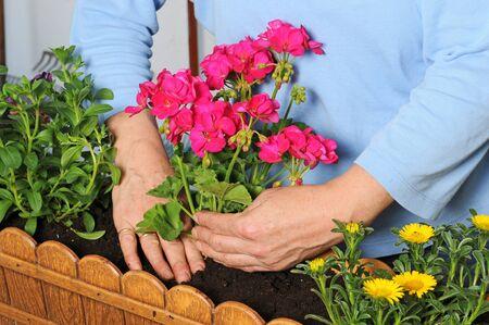 Pflanzen: Hausfrau beim Bepflanzen eines Balkon-Blumenkastens   Hausfrau is planting a flower box