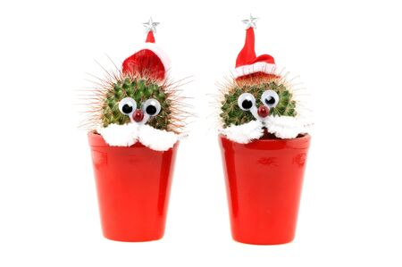 Funny decorated cactus with Santas hat photo