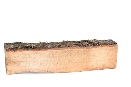 wood log: Wood log as fire wood in front of a white background