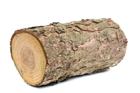 log on: Wood log as fire wood in front of a white background