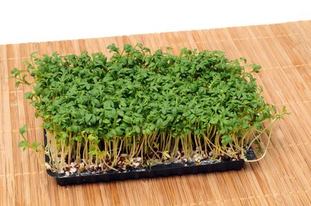 Cress seedlings are often used as condiment for cooking       photo