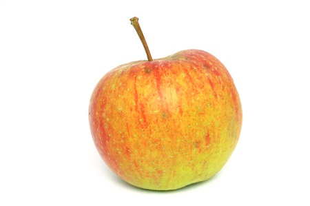Windfall apple in front of a white background photo