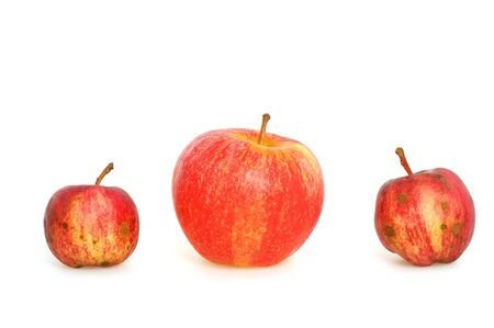 fester: Worm-eaten apple from the own garden contra apple from the shop in first class quality Stock Photo