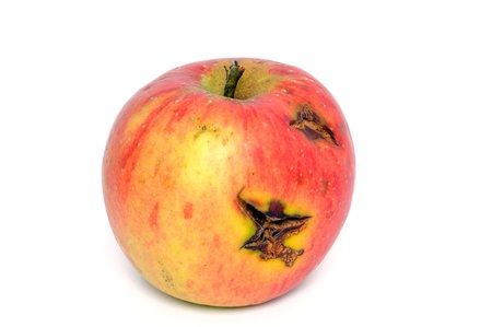 Windwall apple in front of a white background photo