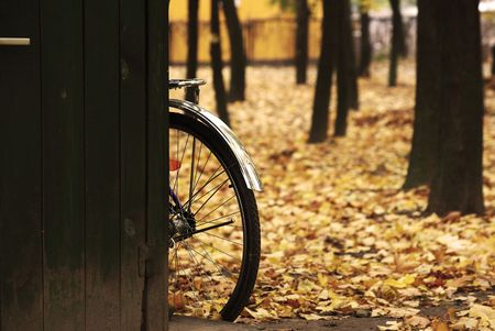 surrounding: Bicycle wheel in the yellow fallen leaves surrounding