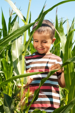 investigate: Little boy investigate yong corn in sunny day