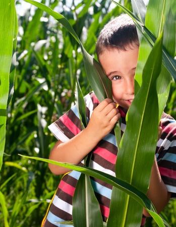 Little boy hide in corn thicket photo