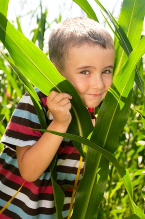 Little boy investigate yong corn in sunny day photo