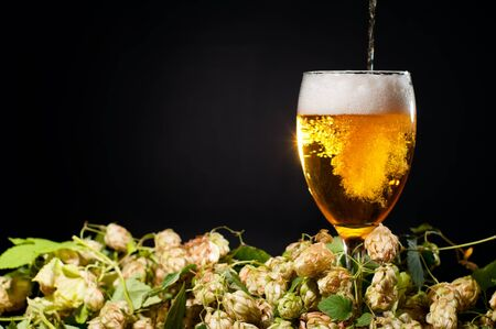 Beer flowing in glass with hop grapes  photo
