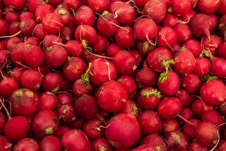 Appetizing red young radish close-up. Farm vegetables for a healthy diet. 版權商用圖片