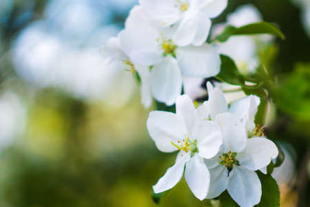 Beautiful flower in spring, delicate flowers macro