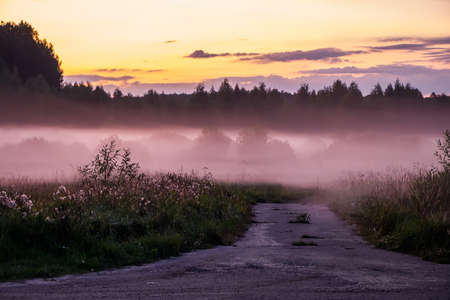 Beautiful purple and pink fog in the forest at sunset. Twilight in nature, blurred background for design