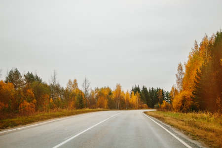 Empty road among the autumn forest, perspective. Beautiful rainy landscape.