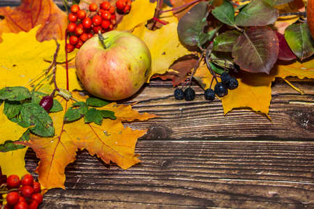 Colorful autumn composition of yellow leaves, apples, pumpkins on a dark brown wooden background. Layout for design.
