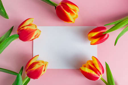 Fresh tulips bouquet and greeting card on pink background. Happy easter. Spring holidays concept.