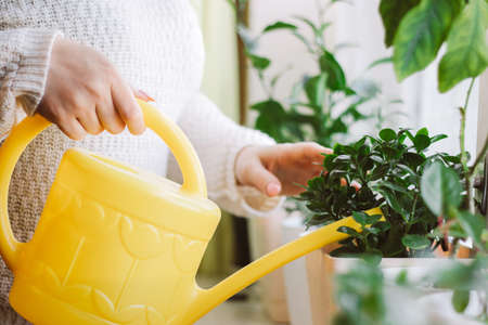 Woman waters potted plants from yellow watering can. Home garden care.