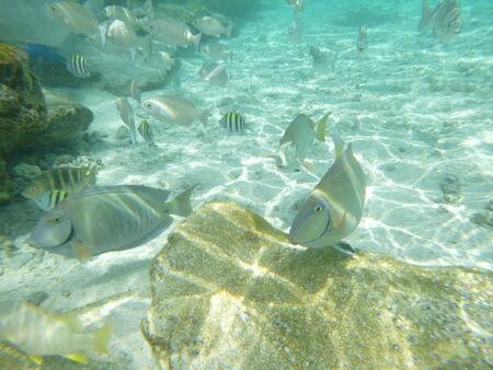 colores: Peces De Colores Variados Nadando En El Oceano
