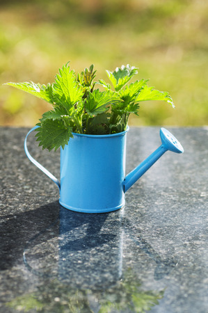 Nettles in a blue watering can on a marble table