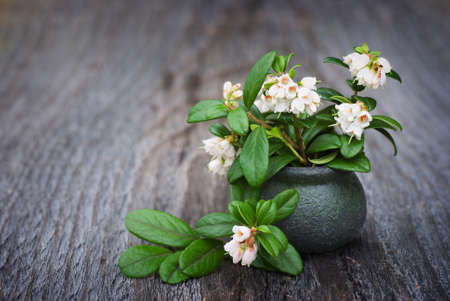 Flowers in a clay vase cowberry on a wooden table photo