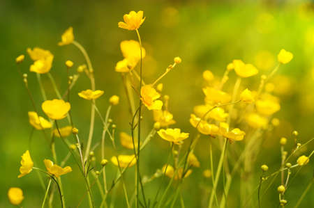 Sunny summer background with yellow wildflowers