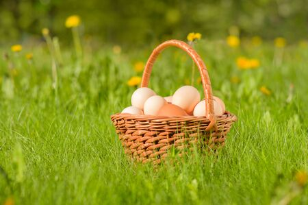 Basket with fresh chicken eggs on a green meadow Stock Photo