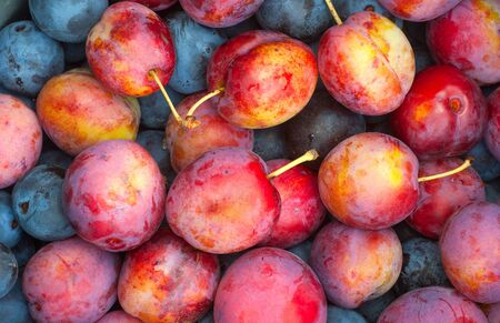 Background of blue and red plums Stock Photo