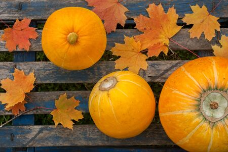 Three ripe yellow pumpkins and maple leaves on blue table Stock Photo
