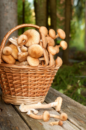 Basket with mushrooms on a wooden table Stock Photo