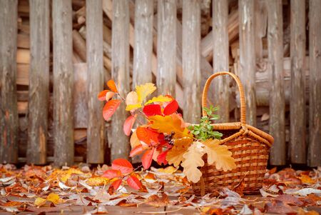 log basket: Basket with autumn leaves on the wooden background