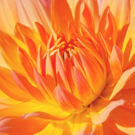Beautiful yellow flower close-up Stock Photo