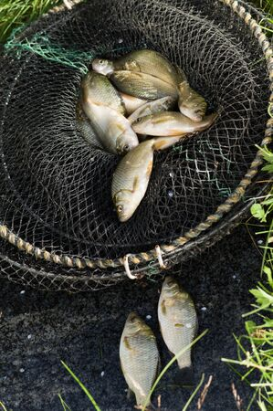 Fresh carp fishing in the cage Stock Photo