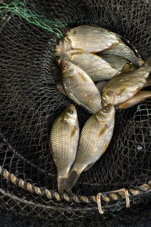 Fresh carp fishing cages in close-up