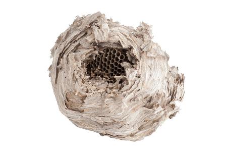 Wasp nest isolated on white background