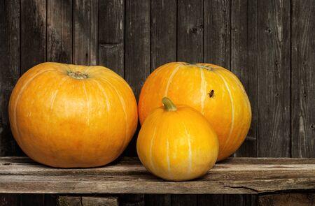 Three appetizing ripe pumpkin on a wooden background