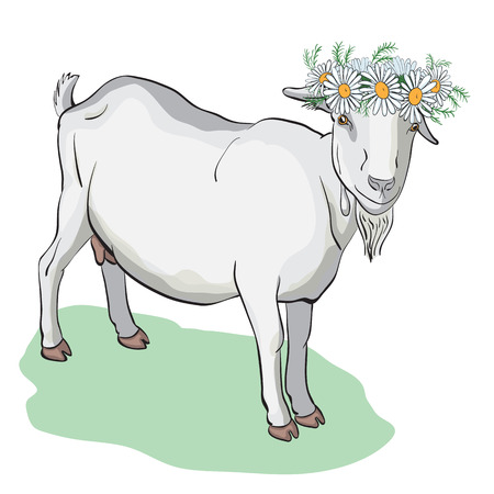 Young cute goat wearing a crown of of camomiles.Vector illustration.