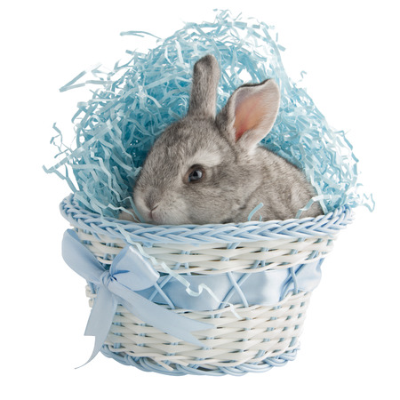 A small gray rabbit in a basket with a blue bow, isolated on white background Stock Photo