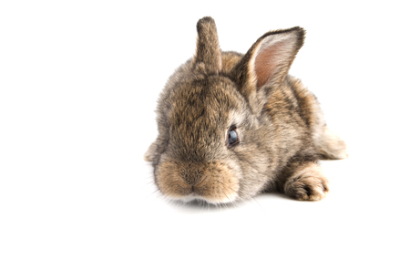 Cute little baby rabbit on white background, isolated.Front view,selective focus