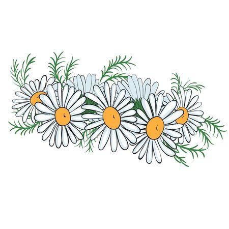 Summer wreath of chamomiles. Vector illustration.