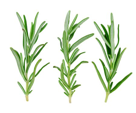 sprigs: sprigs of rosemary on a white background