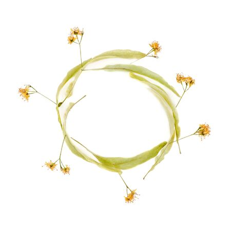 cupping glass cupping: linden flowers placed out of isolation in a circle on a white background