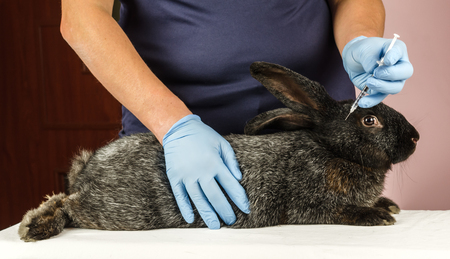 conducts: veterinarian conducts vaccinated rabbits